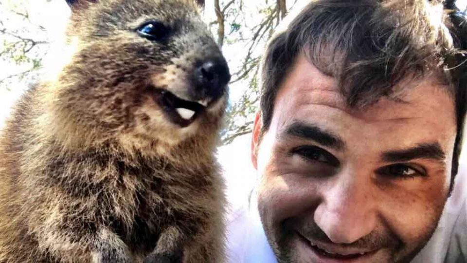 Roger Federer meets a furry friend on Rottnest Island: @rogerfederer
